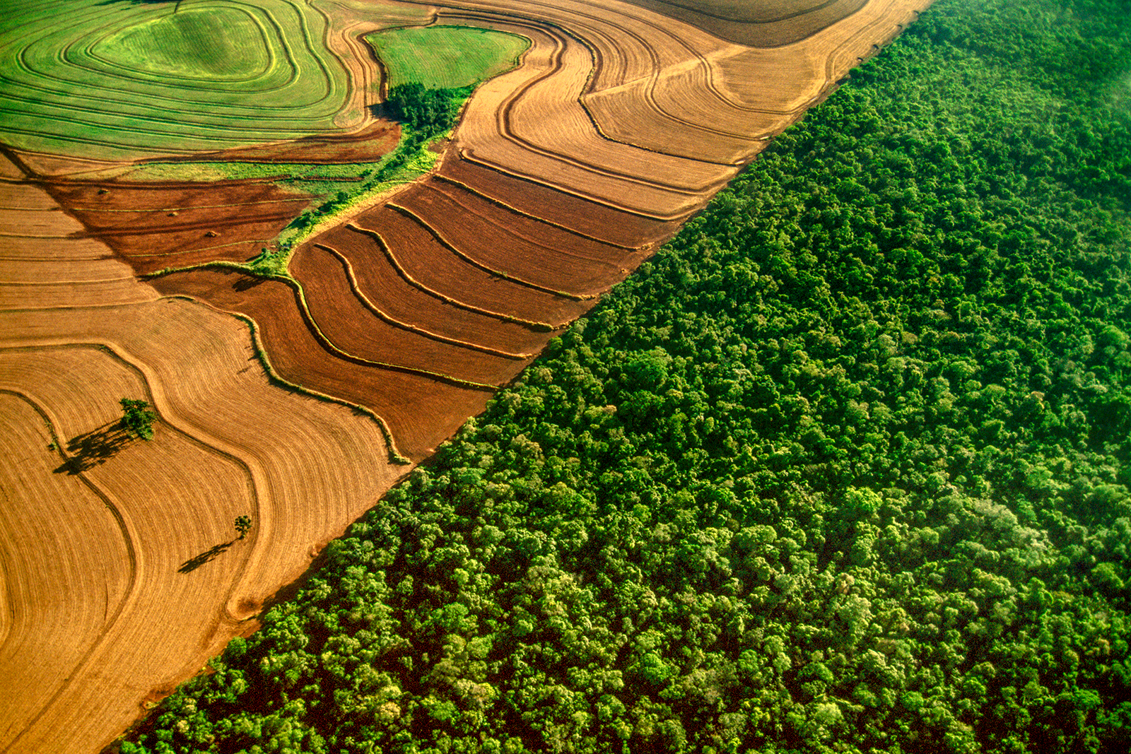 Cropland bordering rainforest, Frans Lanting