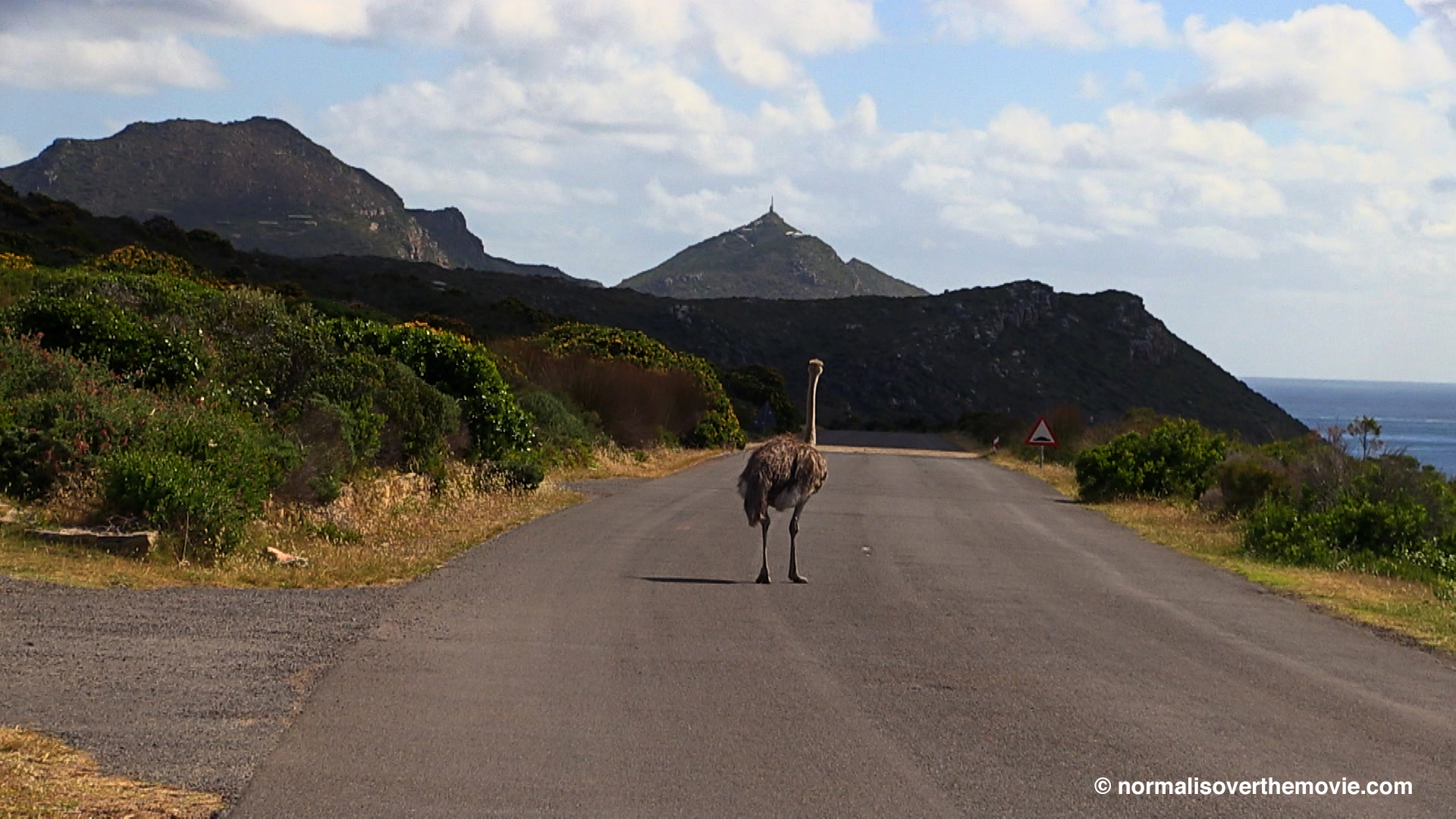 Ostrich on road in Normal Is Over © Renée Scheltema
